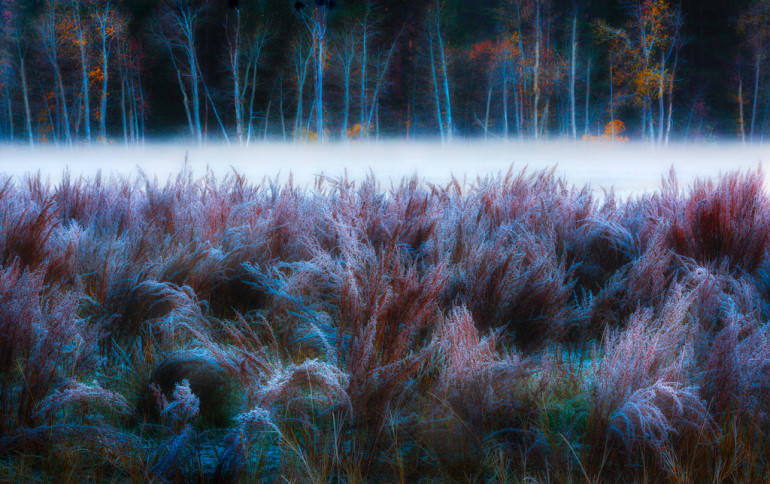 Hoar Frost and Mist