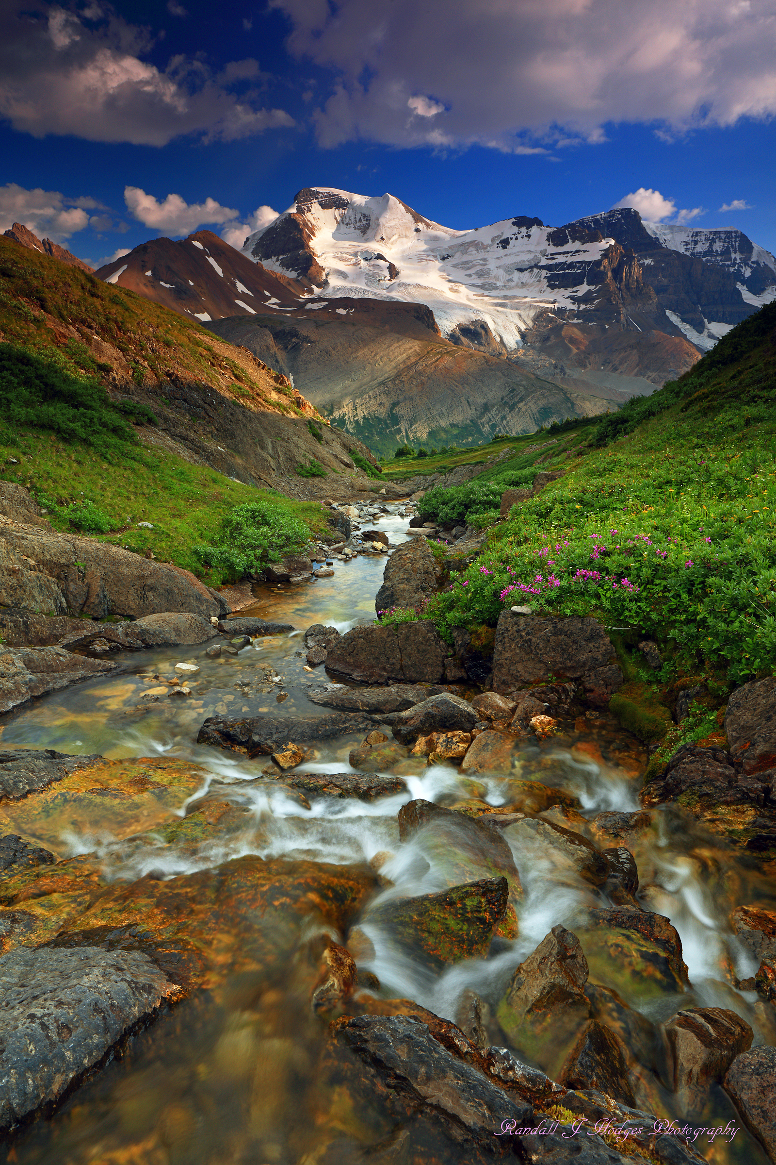 Creek and Wildflowers and Mt Anthabaska from Wilcox Pass in Jasper National Park in Canada