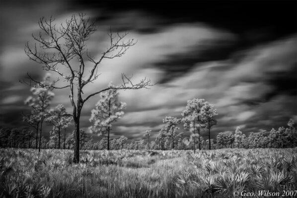 The Black and White Florida Landscape – Palmetto Prairie